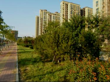 济南市北湖片区历黄路景观绿化工程