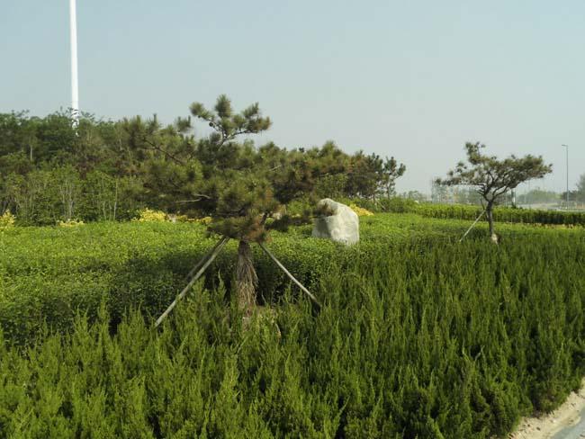 潍坊滨海经济开发区海惠路段