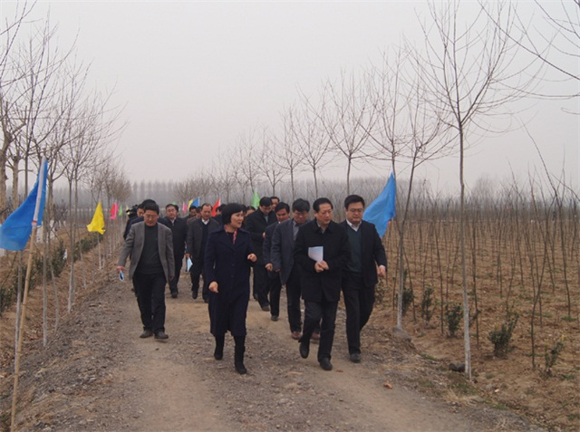 新泰市委副书记、市长刘钦海来公司苗圃指导工作