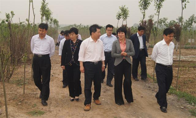 省林业厅产业处岳炳勋处长(中间)来苗圃指导工作